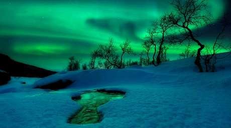 En el concurso participaron fotógrafos profesionales y amateurs de todas partes del mundo. Finalista en la categoría Tierra y Espacio: Mundo Verde, de Arild Heitmann (Noruega)