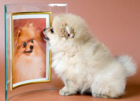 Segundo pesquisa da Universidade de Hiroshima, manter uma foto de um animal na mesa ajuda a trabalhar com mais afinco