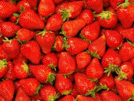 Antioxidante do morango pode prevenir rugas