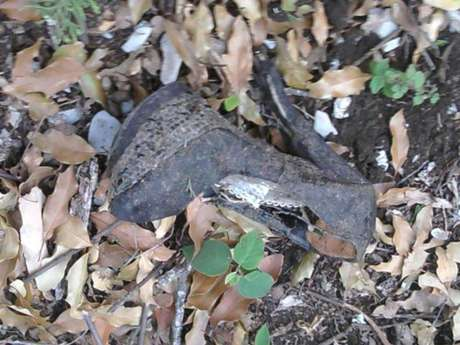 """Joaquín López-Dóriga compartió una foto de uno de los zapatos de Jenni Rivera hallados en la zona del accidente. """"El zapato de Jenni Rivera, como el de Cenicienta, en el lugar del accidente"""", escribió en Twitter."""