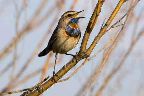 O canto de pássaros é o preferido para despertar, segundo a pesquisa