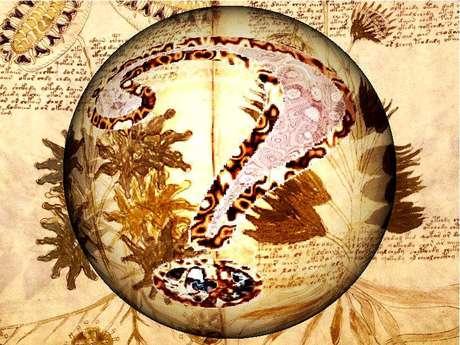 Se intuye que pudo ser un manual de alquimia o de medicina medieval, sin embargo el gran misterio radica en el extraño lenguaje, el cual no guarda relación con ningún idioma europeo.
