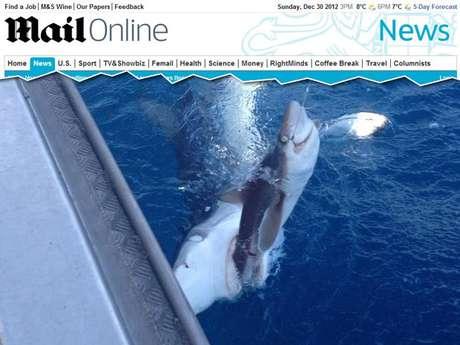 A foto de um tubarão devorando outro chamou a atenção de internautas do site Reddit