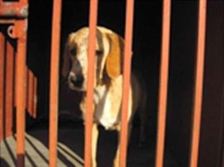 """""""La población canina que deambula por el Bosque de Chapultepec se calcula en unos 300 ejemplares, algunos de ellos, en lugares de constante actividad humana, como la pista 'El Sope', donde se han localizado animales agresivos"""", informó esta noche la corporación en un comunicado.<br />"""