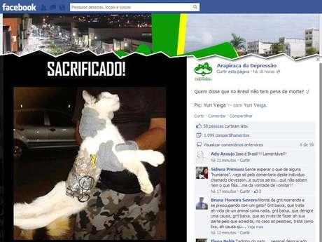 Gato foi apreendido em Alagoas carregando em seu corpo serras e celular