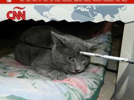 O gato Mack levou uma flechada que atravessou seu crânio