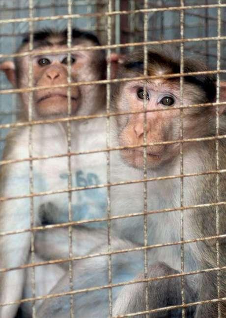 Una nueva ley protegerá a los animales de la experimentación científica