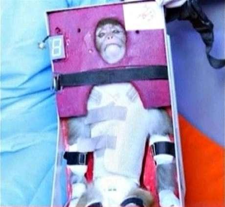 Captura de tela de gravações de vídeos publicadas em 28 de janeiro do macaco que foi lançado ao espaço.