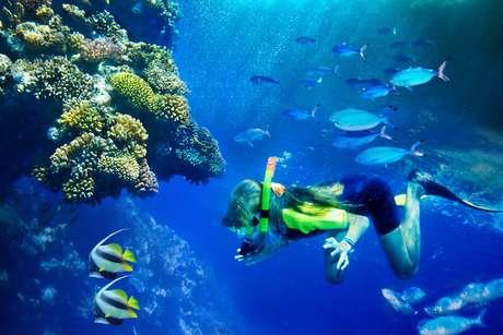 Durante o dia, turistas mais corajosos podem tocar e aprender mais sobre os animais marinhos
