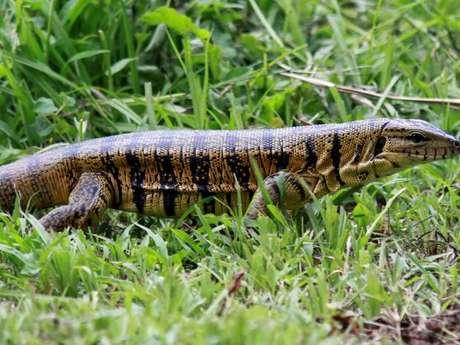 Asa Wright Nature Centre, localizado na ilha deTrinidad, conta com diversas espécies de animais e ainda oferece trilhas, passeios com guias especializados e palestras de incentivo à preservação da natureza