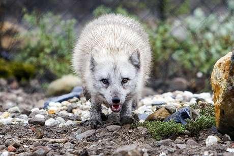 """<p>La Sociedad Protectora de Animales subrayó hoy que los ataques de zorros a personas """"son muy poco frecuentes"""".</p>"""
