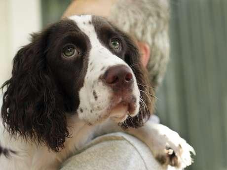 <p>Cães colaboram não só com carinho e companheirismo, mas também com a saúde</p>