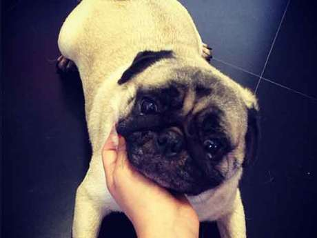 Marquezine postou foto de seu cachorro no Instagram