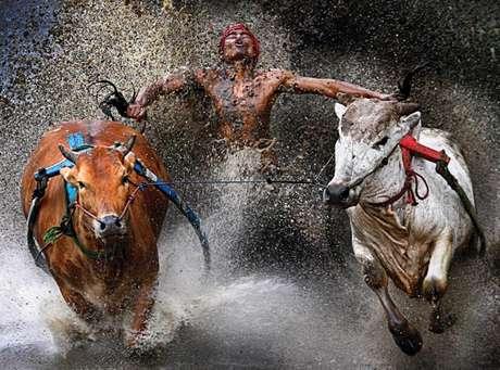 <p>Imagen ganadora del primer premio en la categoría de Deportes. Deporte tradicional en Indonesia, las carreras de bueyes y toros</p>