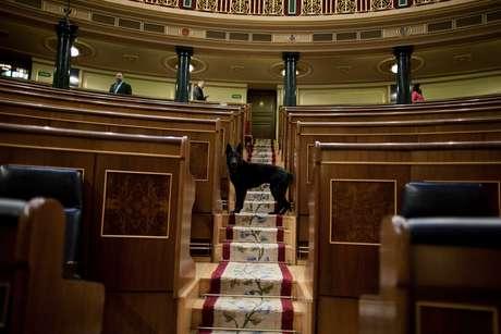 <p>En solo un día decenas de imágenes han hecho noticia. En España, un perro policía revisa el hemiciclo del Congreso de los Diputados antes del comienzo de la sesión del debate sobre el estado de la nación. Vea más fotos impactantes en el mundo.</p>