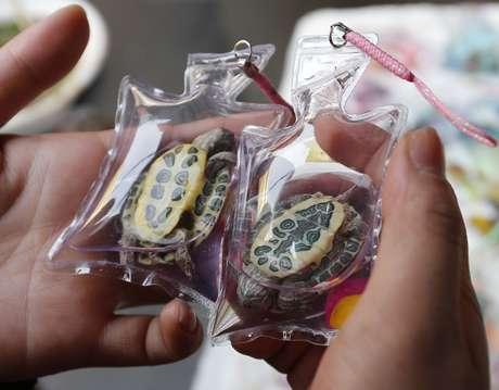 Mulher confere duas pequenas tartarugas confinadas antes de decidir qual comprar