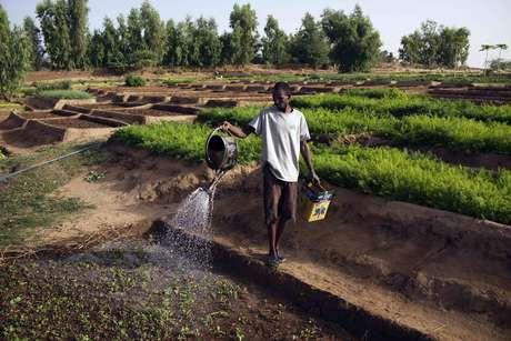<p>São necessários de 2 mil a 5 mil litros de água para produzir a alimentação diária de uma pessoa</p>