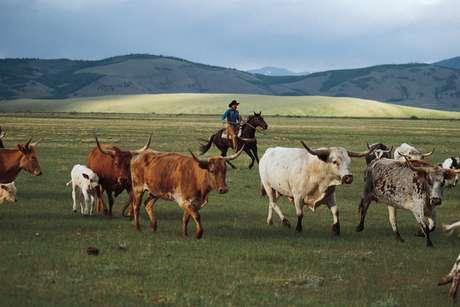 <p>Chico Basin é um rancho de verdade, e os visitantes amntém o rancho funcionando</p>