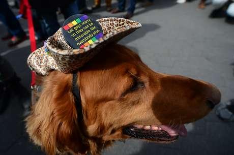 <p>Cão de manifestante a favor do casamento gay usa chapéu com bottom bem humorado em que se lê: 'deixem os gays casarem para que eles possam ser infelizes como as outras pessoas'</p>