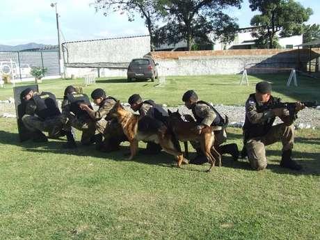 Segundo a PM, os cães dispensados pela corporação têm entre 9 meses e 3 anos e não se adaptaram às funções da atividade policial
