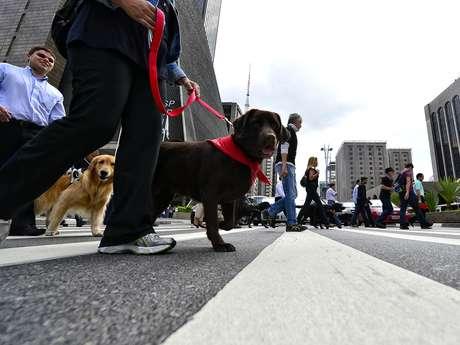 <p>Depois de formado, o cão-guia é entregue gratuitamente à pessoa com deficiência visual inscrita no instituto</p>