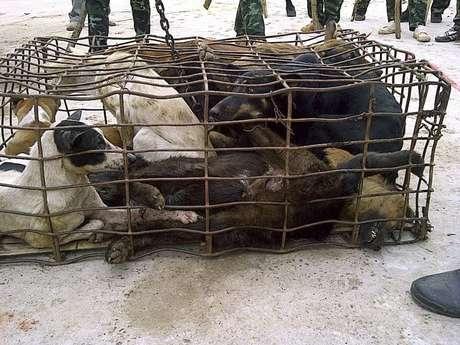 Nas províncias próximas à fronteira de Laos, organizações de proteção dos animais afirmam que já quase não se vê cães de nenhuma raça
