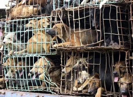 Muitos cães morrem durante viagem de até três dias ao destino final, ou por desidratação ou por asfixia