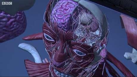 Modelo digital de cabeça e pescoço humanos tem o potencial de revolucionar o ensino de odontologia e medicina