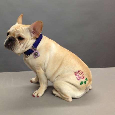 <p>Atatuagempara cachorro éfeitacom tinta com pequenos cristais, aplicada sobre os pelos do animal</p>