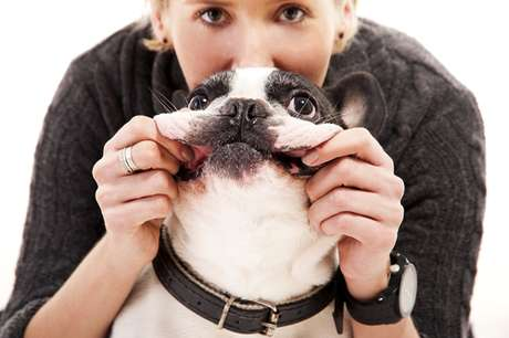 Higienizar os dentes do animal e fazer a limpeza de tártaro garante que os dentes sejam mantidos durante a vida toda