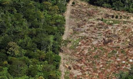<p>Apesar de recuar, o desmatamento ainda é uma das maiores preocupações relacionadas ao meio ambiente no Brasil</p>