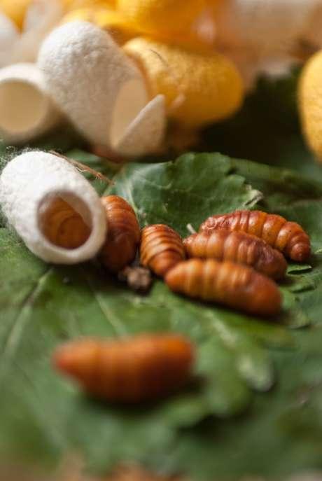 <p>Vietnamitas, chineses e coreanos apreciam os casulos do bicho-da-sedafritos ou cozidos</p>