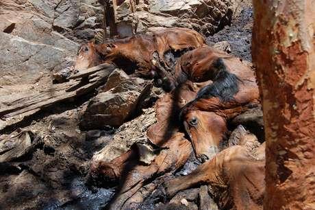 Os defensores do abate dizem que os corpos dos animais - que estão morrendo de fome e sede - estão poluindo a água da região e impactando no ecossistema