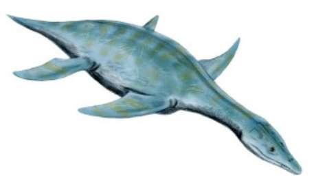 Espécie de répteis teria parentesco com o réptil aquático Leptoceidus Capensis