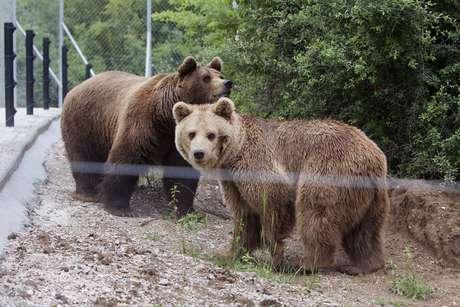 Ursos são fotografados na chegada ao santuário