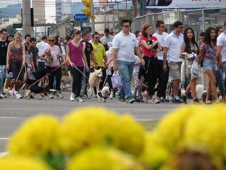 Cãominhada percorreu as ruas de Blumenau na manhã deste domingo