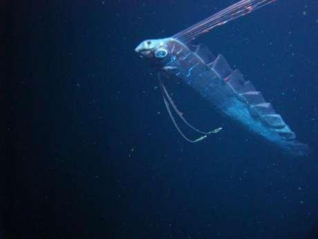 <p>Pesquisadores americanos registraram o peixe-remo em seu habitat natural pela primeira vez. O grupo utilizou veículos não tripulados emprestados por empresas petrolíferas para encontrar esse peixe, que normalmente só é visto na superfície do mar quando está próximo da morte. Também conhecido como rei-dos-arenques, o <em>Regalecus glesne</em> é o maior peixe ósseo do mundo.</p>