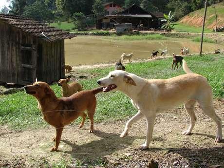 <p>O ex-caminhoneiro Rogério da Silva cuida de 116 cães, que tem como filhos, em um rancho no município de Gaspar, em Santa Catarina</p>