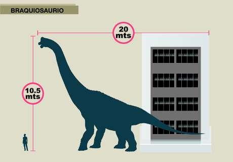 El Braquisaurio, de 20 metros de largo por diez de alto, es similar al tamaño de un edificio de cuatro pisos.