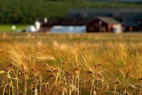 Entidades do setor de agronegócio temem barreiras não tarifárias às exportações