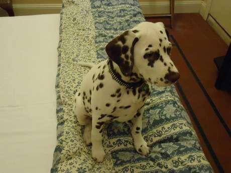 <p><strong>The Hughenden, Austrália:</strong>durante uma viagem à Austrália com seu cachorro, o lugar indicado para se hospedar é o The Hughenden</p>
