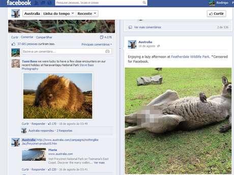 <p>Foto do canguru na página da Austrália no Facebook teve milhares de comentários</p>