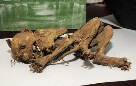 O esqueleto foi encontrado há dois anos e meio