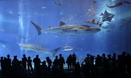 Visitantes observam baleias e arrais em um dos maiores tanques do mundo, no Japão