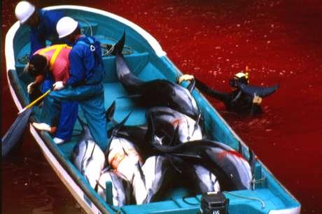 <p>Pescadores navegam por um rio coberto por sangue de golfinhos em Taiji, em 2003:cidade japonesaconhecidapelo massacre de golfinhosdeve abrir um parque marinho</p>
