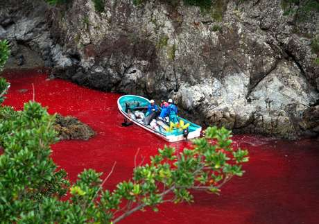 <p>Iniciativa de reserva natural, que pode abrir suas portas em cinco anos, não significa o fim da pesca em Taiji</p>