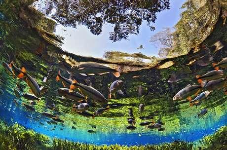 Bonito é conhecido pelos águas cristalinas e natureza preservada