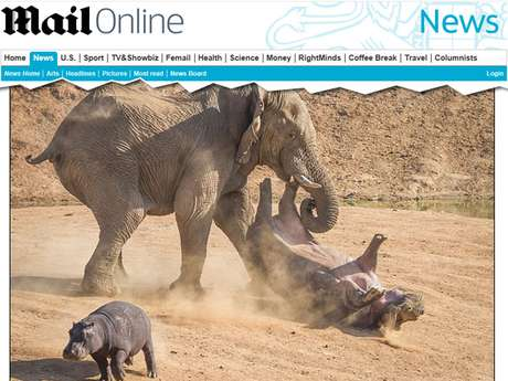 <p>Hipopótamo fêmea tentou se defender, mas foi jogada ao ar peloelefante em reserva na Namíbia</p>