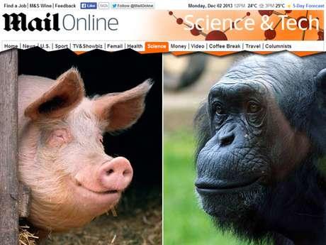 Cientista sugere que uma pele sem pelos e com gordura subcutânea seria explicada por ancestrais suínos