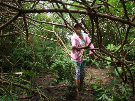 Albertina da Silva Moraes sobrevive plantando milho e mandioca no Capatará